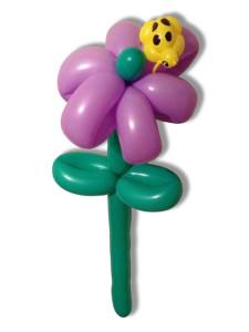 balloon-flower